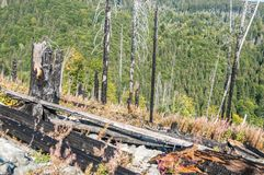After Forest Fire. Vitosha Bulgaria national park royalty free stock images