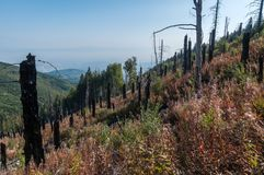 After Forest Fire. Vitosha Bulgaria national park royalty free stock photography