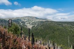 After Forest Fire. Vitosha Bulgaria national park stock images
