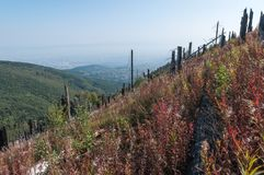 After Forest Fire. Vitosha Bulgaria national park stock photos