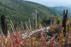 After Forest Fire. Vitosha Bulgaria national park royalty free stock photos