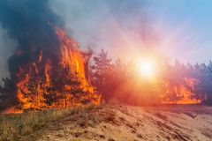 Forest fire, Wildfire close in the daytime.  stock image
