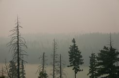 Free Forest Fire With Gray Smoke And Trees Stock Photography - 100026702