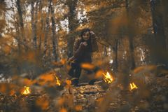 Forest, Fire, Woodland, Bonfire royalty free stock photography