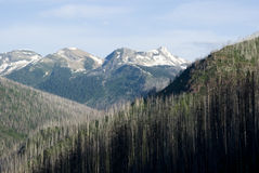 Forest fireire damage Royalty Free Stock Photos