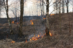 Forest fires  dangerous brush fire. Royalty Free Stock Photo