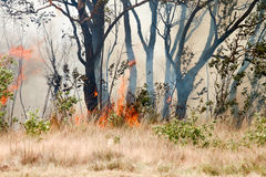 Forest fires in the daytime. Royalty Free Stock Photography
