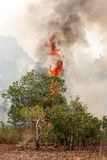 Forest fires in the daytime. Royalty Free Stock Photos