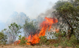 Forest fires. Destroyed by burning tropical forest in Thailand Royalty Free Stock Photos