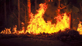 Forest fires. Fire is burning trees in the forest Royalty Free Stock Image