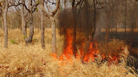 Forest fires Royalty Free Stock Photography