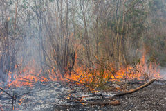 Forest fires. Forest fire in dry wood Stock Photography