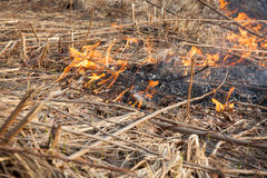 Forest fires Stock Photos