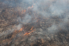 Forest fires Stock Image