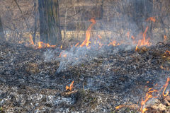 Forest fires Royalty Free Stock Image