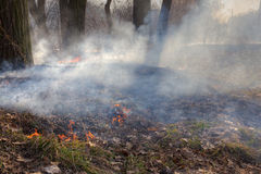 Forest fires Stock Images