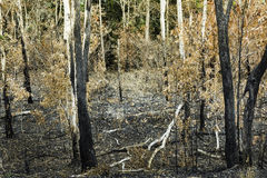 Forest fires was extinguished Stock Photos