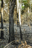 Forest fires was extinguished. Royalty Free Stock Images