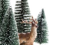 Forest firs and reindeer Royalty Free Stock Images
