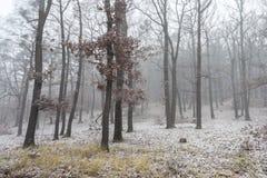 Forest First Snow nevoento no outono Imagem de Stock