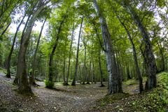 Forest fisheye. Forest ornamental grasses and trees fisheye lens royalty free stock image
