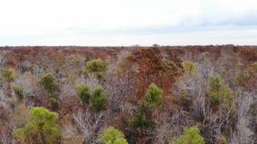 Forest flight in Louisiana stock video