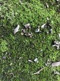 Forest Floor Stockfoto