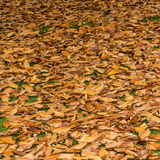 Forest Floor Royalty Free Stock Photography