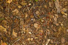 Forest Floor Images libres de droits