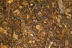 Forest Floor Royalty-vrije Stock Afbeeldingen