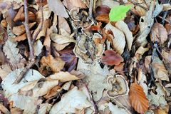 Forest Floor Royaltyfria Bilder