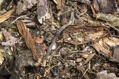 Forest Floor Fotos de archivo