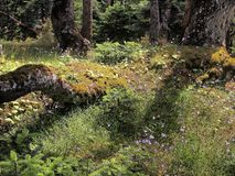 Forest Floor Fotografía de archivo libre de regalías
