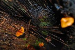 Forest Floor Imagen de archivo