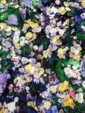 Forest Floor Foto de archivo libre de regalías