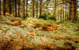 Forest Floor Fotografia Stock