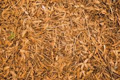 Forest Floor. Leaf litter on the forest floor Stock Photo