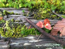 Forest floor background. Green Moss, red leaves and wood on forest floor Royalty Free Stock Images