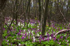 Bright flowers in the forest Stock Image