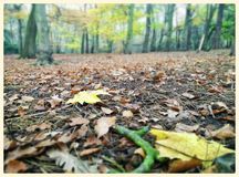Forest floor royalty free stock images
