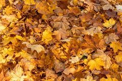 Forest floor covered with dry leaves stock image