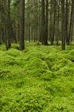 Forest Floor cubierto de musgo Fotografía de archivo