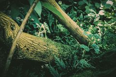 Forest Floor. A dense, forest floor in the north east Royalty Free Stock Photo