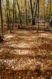 Forest floor in the fall in the Arboretum, Ann Arbor, Michigan USA. Maple and hickory leaves Stock Image
