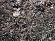 Forest floor ground. Grass leaves pine needles Royalty Free Stock Images