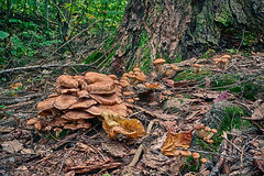 Forest Floor in HDR. Wild mushrooms growing on the forest floor beside a treetrunk photographed in HDR Royalty Free Stock Photos