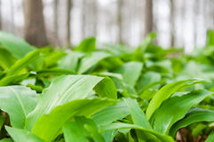 Forest floor Royalty Free Stock Photos