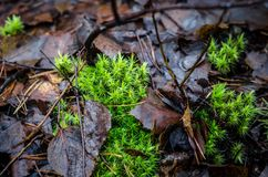 Forest floor mith moss and leaves in Finland. Shot in autumn in city called Kouvola. Wet and rainy Royalty Free Stock Photography