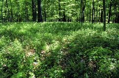 Free Forest Floor One Year After Burn   58119 Royalty Free Stock Image - 171843696