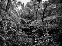 Forest floor with rocks and ferns Stock Images